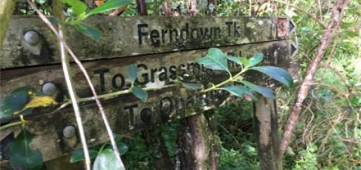 Web ferndown